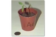 new-tomato-seedling